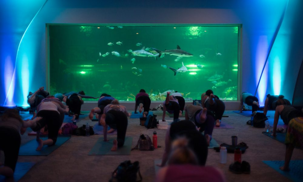 Yoga-with-the-sharks1