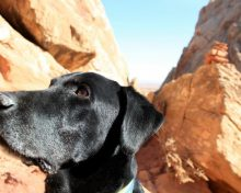 Love Like a Dog: A Lesson in Unconditional Love